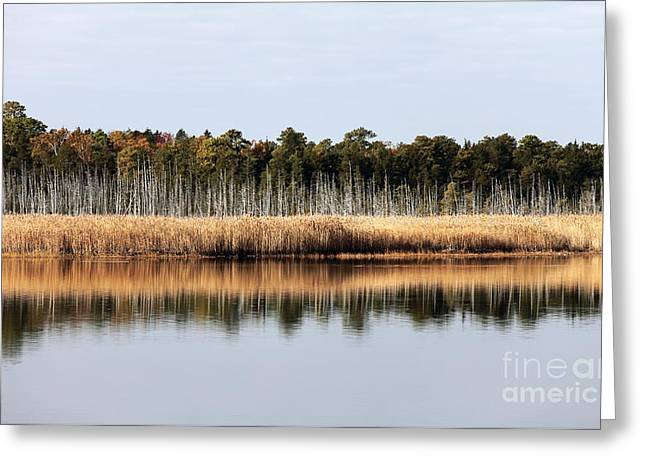 Pine Barrens Reflections Greeting Card by John Rizzuto