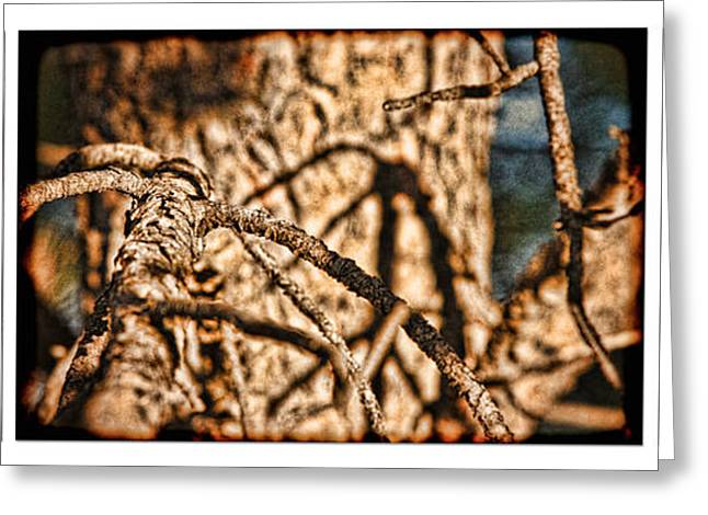Nature Study Greeting Cards - Pine Branch Study in Three Greeting Card by Lincoln Rogers