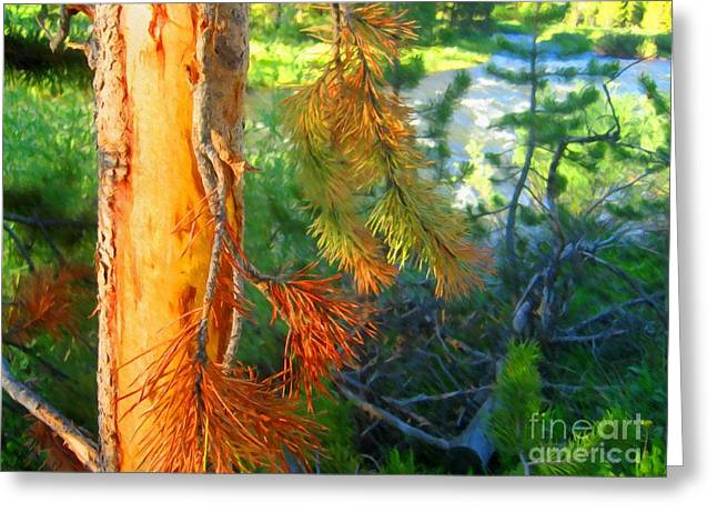 Pine Needles Mixed Media Greeting Cards - Pine by the River Greeting Card by John Kreiter