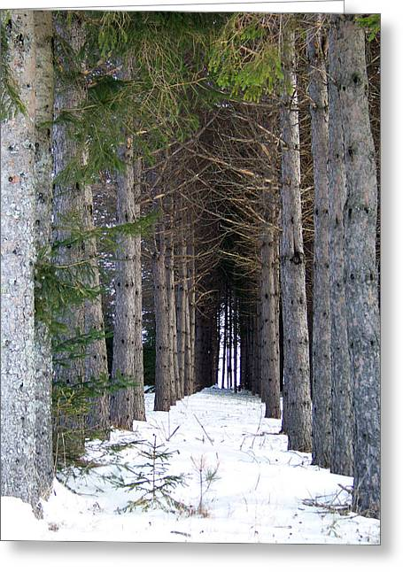 Winter In Maine Greeting Cards - Pine Cathedral Greeting Card by William Tasker