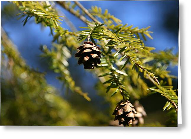 Union Connecticut Greeting Cards - Pine Cone Blues Greeting Card by Neal  Eslinger