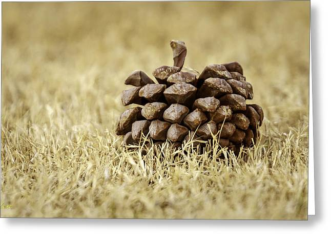 Pine Cones Digital Greeting Cards - Pine Cone Greeting Card by George Lenz