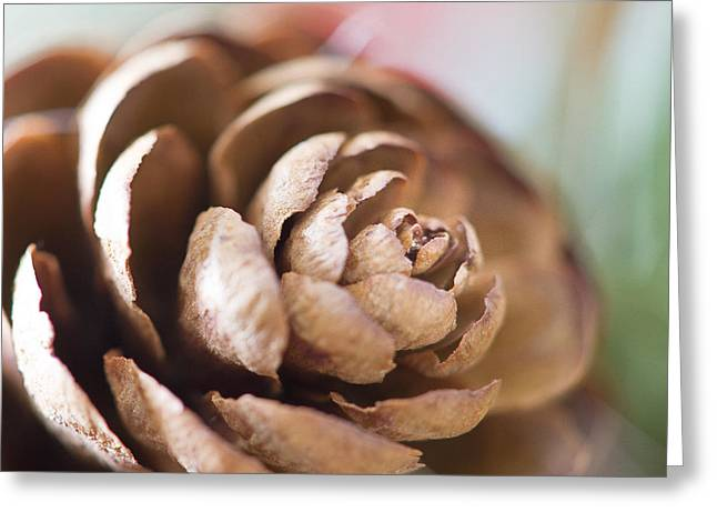 Pine Cones Greeting Cards - Pine Cone Greeting Card by Ivy Ho
