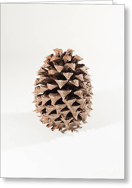 Pine Cones Greeting Cards - Pine Cone Greeting Card by Jim Corwin