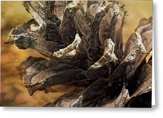 Artography Greeting Cards - Pine Cone Left Greeting Card by Melissa Bittinger