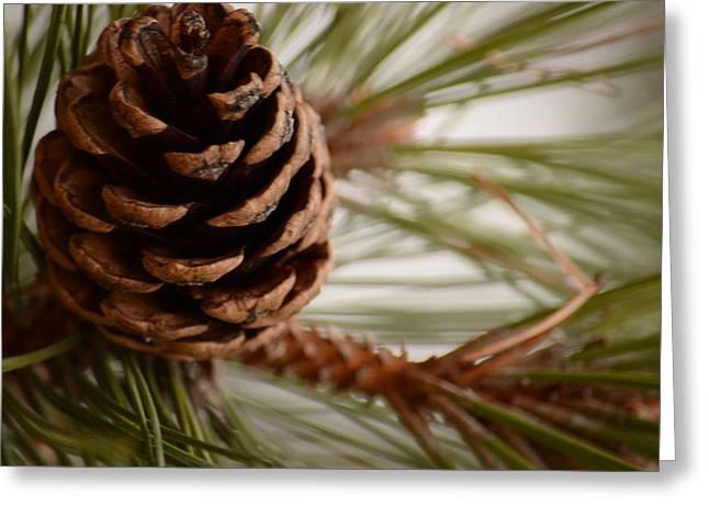 Marianne Kuzimski Greeting Cards - Pine Cone Greeting Card by Marianne Kuzimski