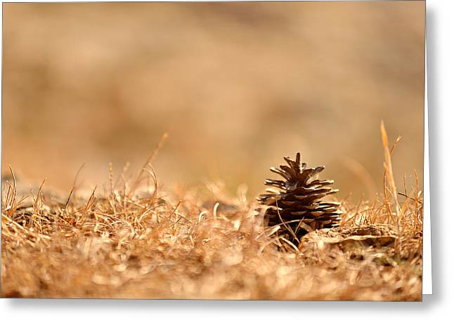 Fir Pyrography Greeting Cards - Pine cone on the ground Greeting Card by Oliver Sved