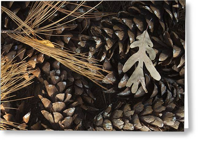Pine Cones Photographs Greeting Cards - Pine Cones and Maple Leaf Greeting Card by Andrew Soundarajan