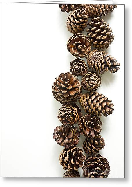 Pine Cones Photographs Greeting Cards - Pine Cones Greeting Card by Edward Fielding