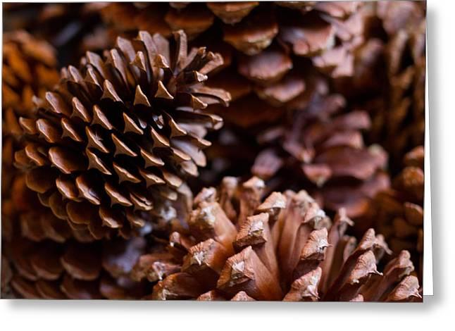 Pine Cones Greeting Cards - Pine Cones Greeting Card by Lauren Goia