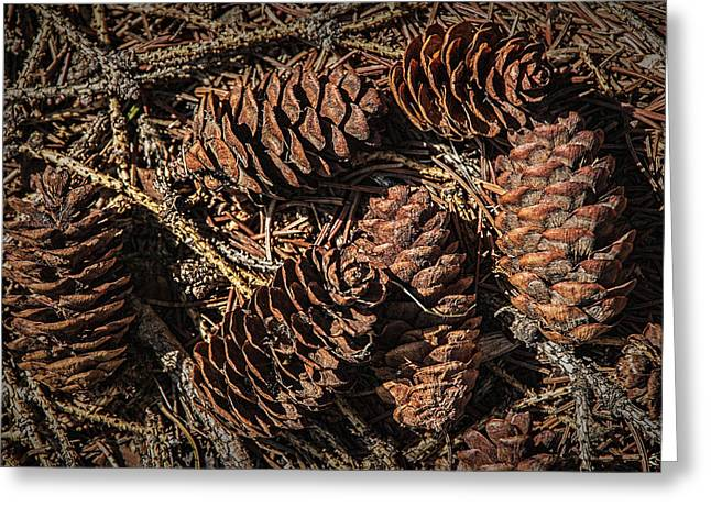 Pine Cones Greeting Cards - Pine Cones on the ground Greeting Card by Randall Nyhof