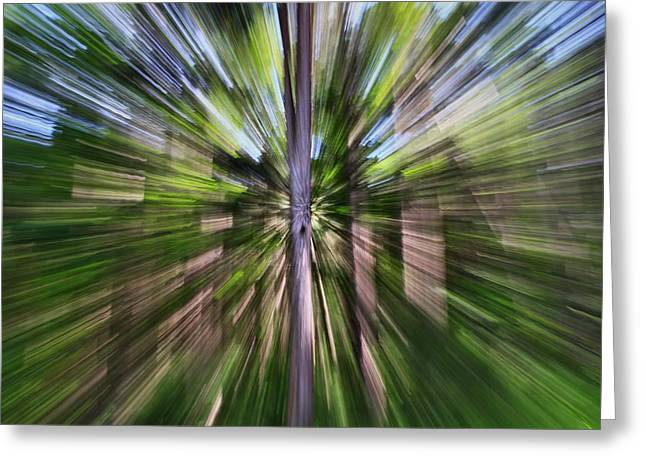 Lush Green Greeting Cards - Pine Forest Abstract Greeting Card by Dan Sproul