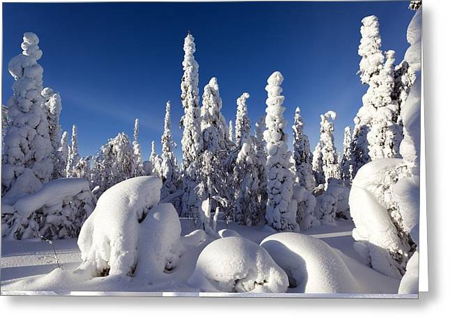 Snowstorm Greeting Cards - Pine forest after heavy snowfall Greeting Card by Science Photo Library