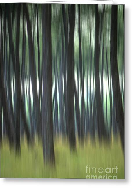 Surreal Landscape Photographs Greeting Cards - Pine forest. Blurred Greeting Card by Bernard Jaubert