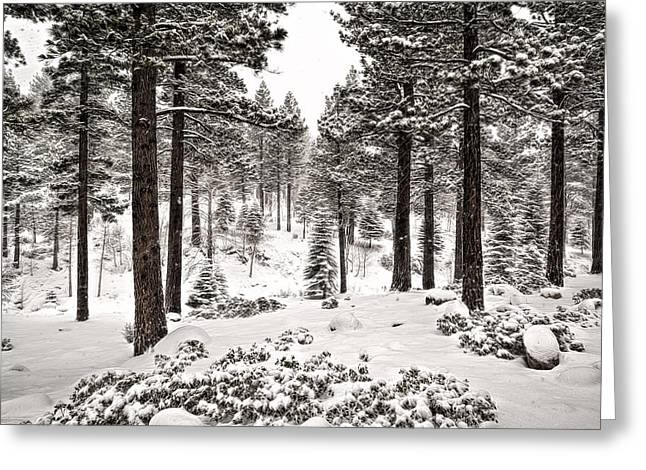 Snowy Day Greeting Cards - Pine Forest Greeting Card by Maria Coulson