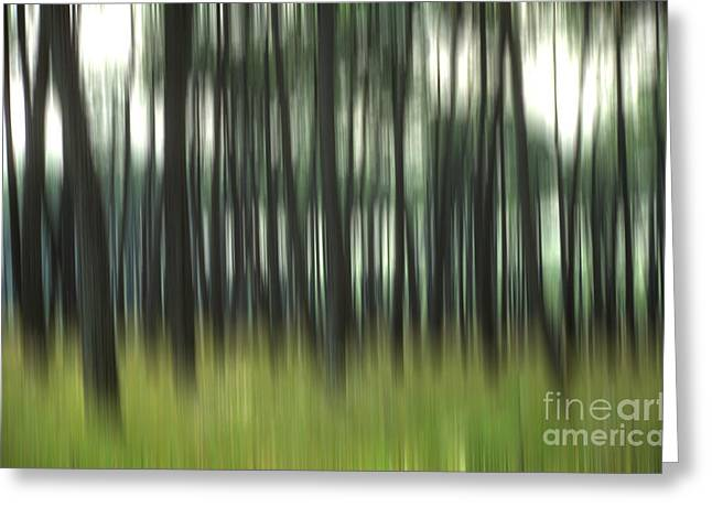 Outside Pictures Greeting Cards - Pine forest.Blurred Greeting Card by Bernard Jaubert