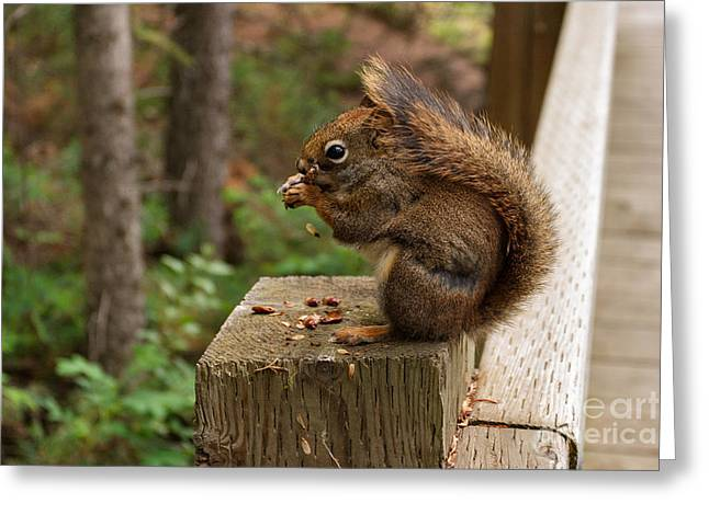 Charles Kozierok Greeting Cards - Pine Lunch Greeting Card by Charles Kozierok