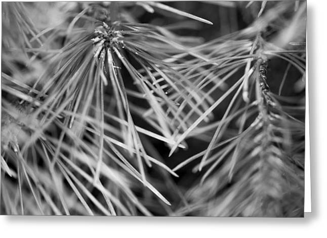 Pine Needles Greeting Cards - Pine Needle Abstract Greeting Card by Susan Stone