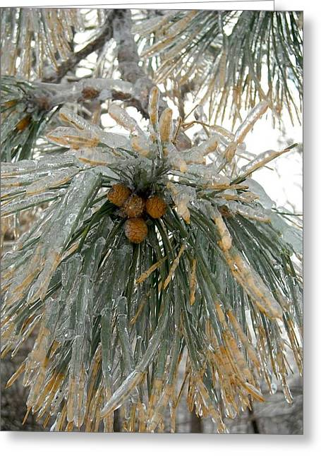 Winter Solstice Greeting Cards Greeting Cards - Pine Needles in Ice Greeting Card by Ishana Ingerman