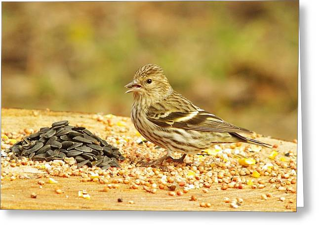 Winter Migrants Greeting Cards - Pine Siskin With A Treat Greeting Card by Billy  Griffis Jr