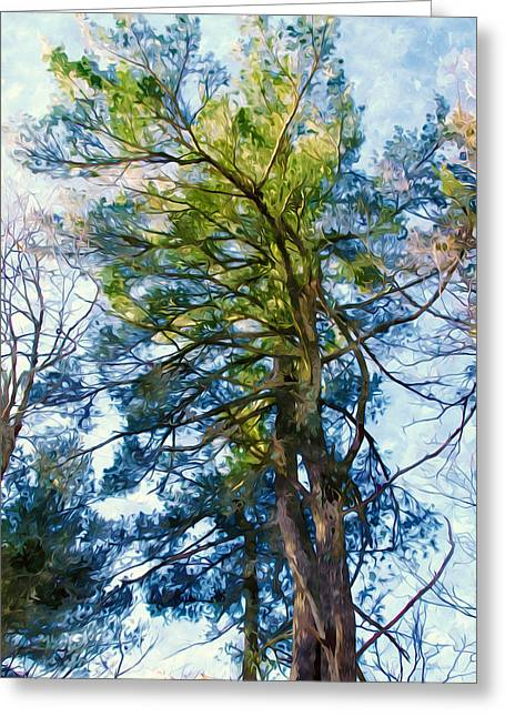 Green Day Paintings Greeting Cards - Pine tree against the blue sky Greeting Card by Lanjee Chee