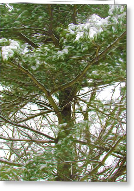 Twiggy Greeting Cards - Pine tree covered with snow 1 Greeting Card by Lanjee Chee