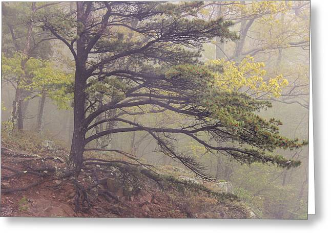 Thick Roots Greeting Cards - Pine Tree in Fog Greeting Card by Rachel Cohen
