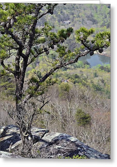 Pine Tree On A Mountain Greeting Card by Susan Leggett