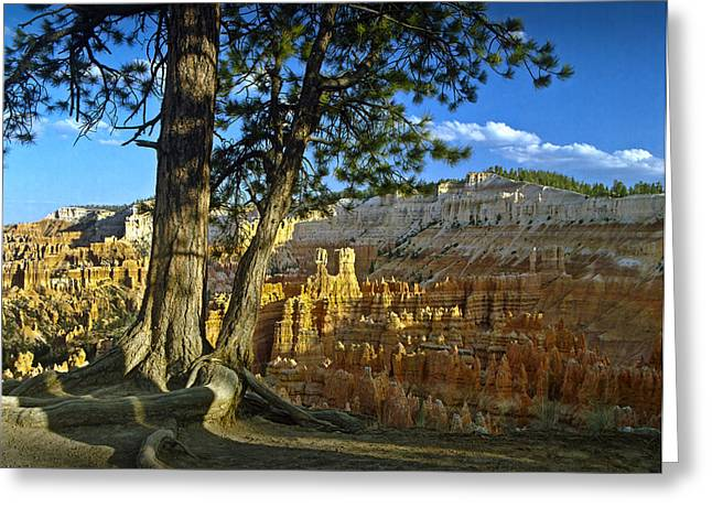 Pine Tree On Ridge Overlooking Bryce Canyon Greeting Card by Randall Nyhof