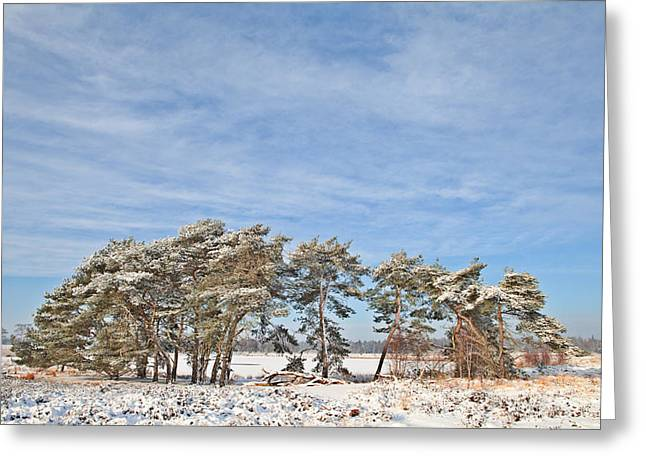 Powder Snow Greeting Cards - Pine Trees At Edge Of Frozen Lake Greeting Card by Dirk Ercken