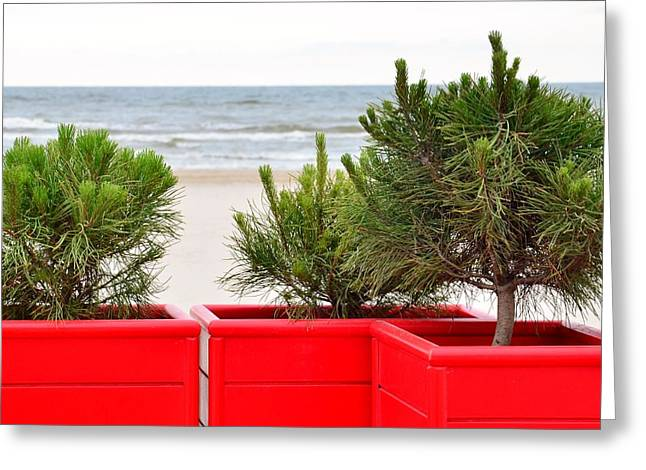Peace Square Format Greeting Cards - Pine trees at seaside Greeting Card by Gynt