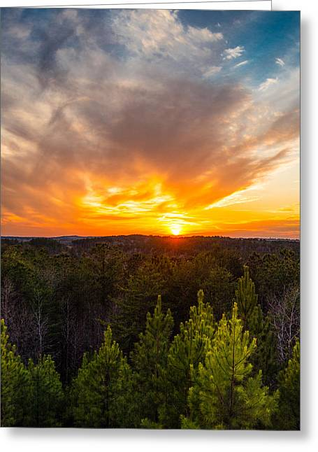 Alabaster Greeting Cards - Pine Trees At Sunset Greeting Card by Parker Cunningham