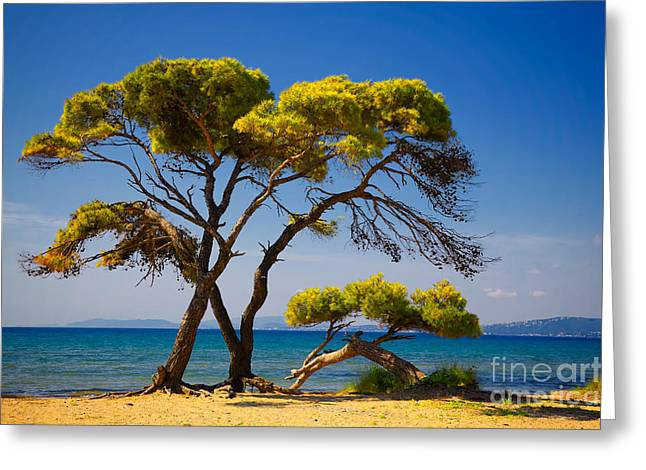 Umbrella Pine Greeting Cards - Pine trees by the beach Greeting Card by Gabriela Insuratelu