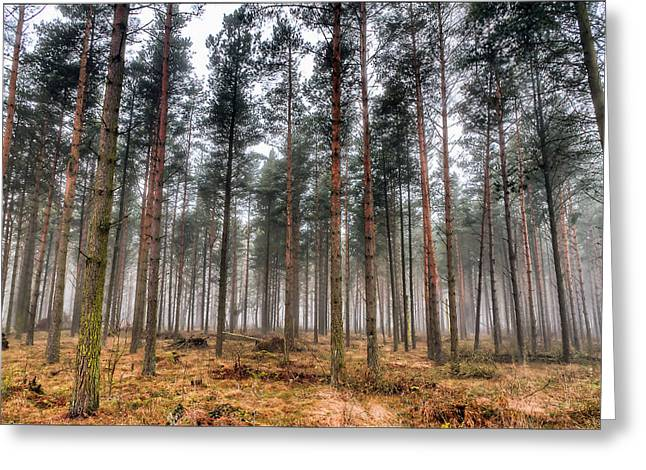 Mood Greeting Cards - Pine Trees In Morning Fog Greeting Card by EXparte SE