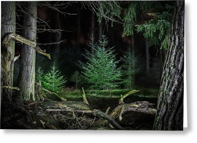 Ghostly Greeting Cards - Pine trees new life Greeting Card by Dirk Ercken