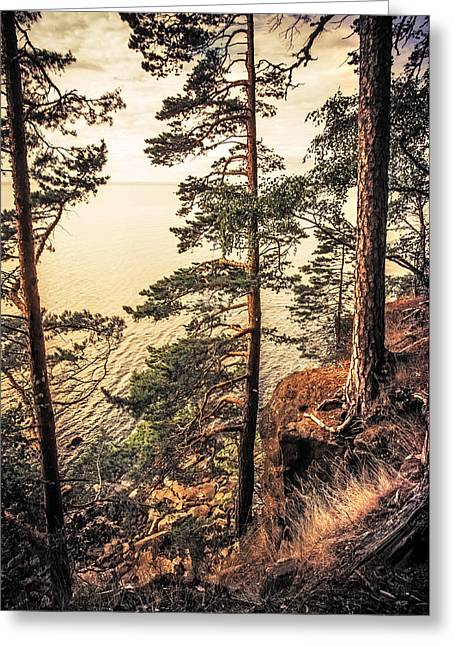 Russian Nature Greeting Cards - Pine Trees of Holy Island Greeting Card by Jenny Rainbow