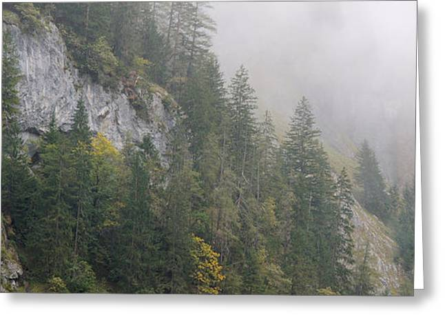 Berne Canton Greeting Cards - Pine Trees On A Hill, Lauterbrunnen Greeting Card by Panoramic Images