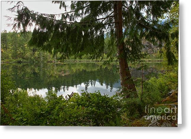 Canadian Wilderness Greeting Cards - Pine Trees Over Starvation Lake Greeting Card by Adam Jewell
