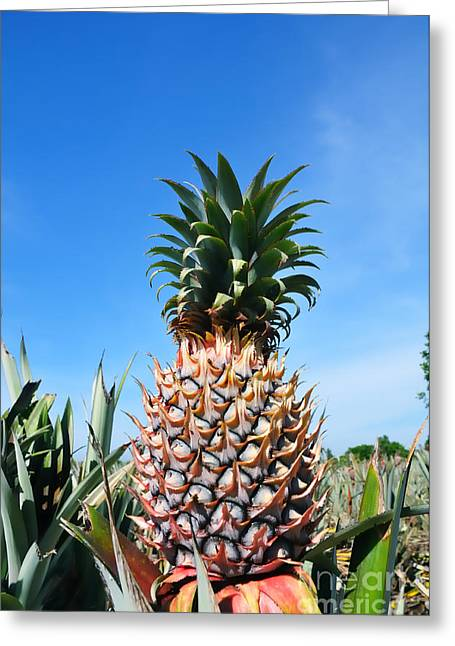 Pineapple Greeting Card by William Voon
