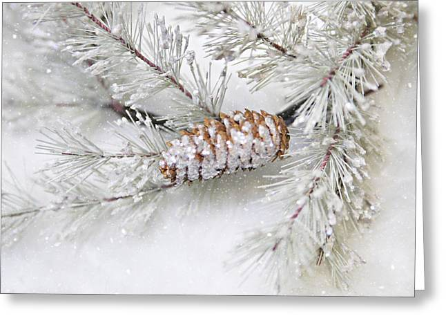 Pinecone Greeting Card by Sylvia Cook