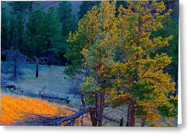 Pines Sculptures Greeting Cards - Pines at Sunset Greeting Card by Peggy Detmers