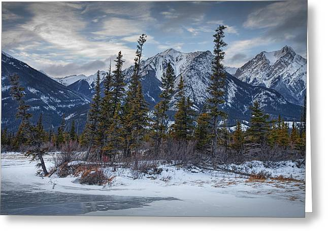 Randy Greeting Cards - Pines at the edge of a lake by a Jasper National Park Mountain Range Greeting Card by Randall Nyhof