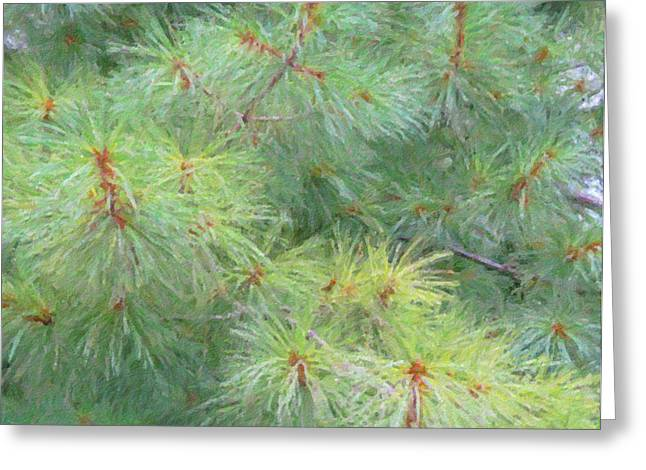 Pine Needles Greeting Cards - Pines - Digital Painting Effect Greeting Card by Rhonda Barrett