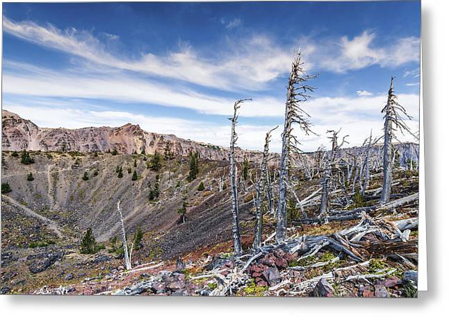 Crater Lake View Greeting Cards - Pines in the Crater Greeting Card by Joseph S Giacalone