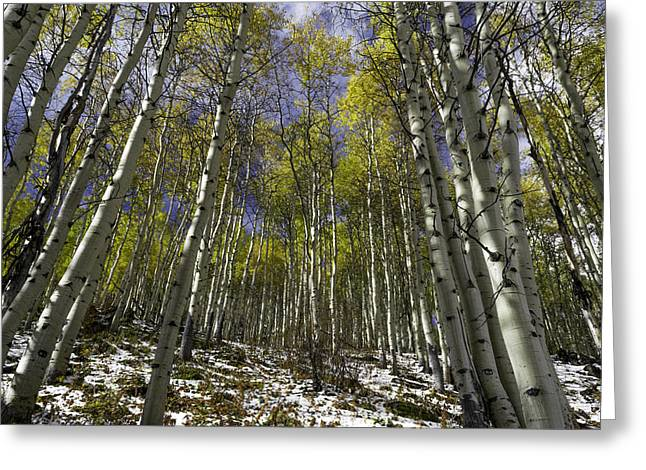 Colorado River Greeting Cards - Piney Lake Aspens Greeting Card by Michael J Bauer