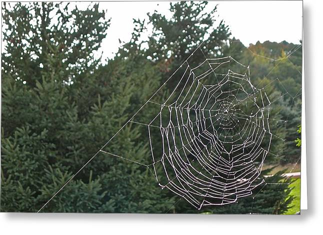 Web Surfing Greeting Cards - Pining for the Web Greeting Card by Randy Rosenberger