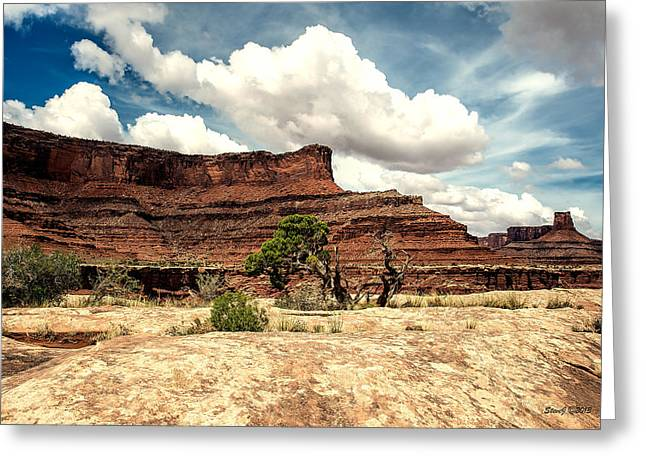 D700 Greeting Cards - Pinions and Canyons Greeting Card by Stephen  Johnson