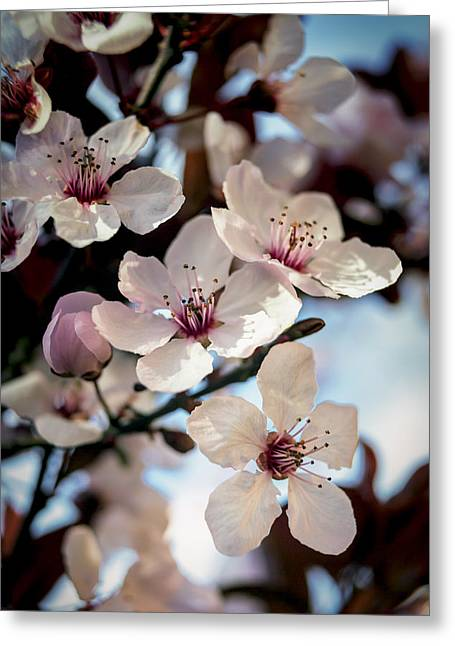 Plum Blossoms Greeting Cards - Pink and Blue Greeting Card by Caitlyn  Grasso