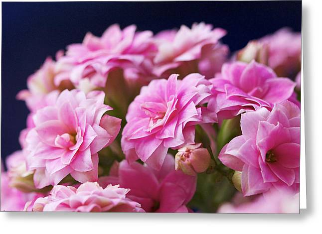 Pink And Blue IIi Greeting Card by Pamela Gail Torres