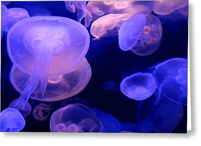 Jelly Fish Digital Art Greeting Cards - Pink and Blue Jellies Greeting Card by Diana Angstadt